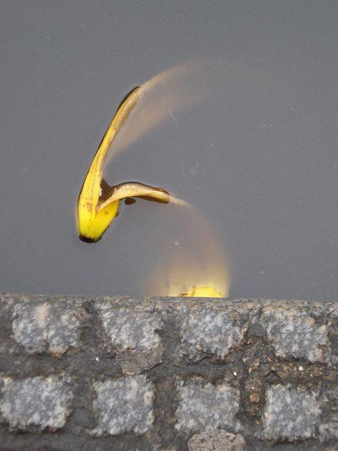 best-bananas-13